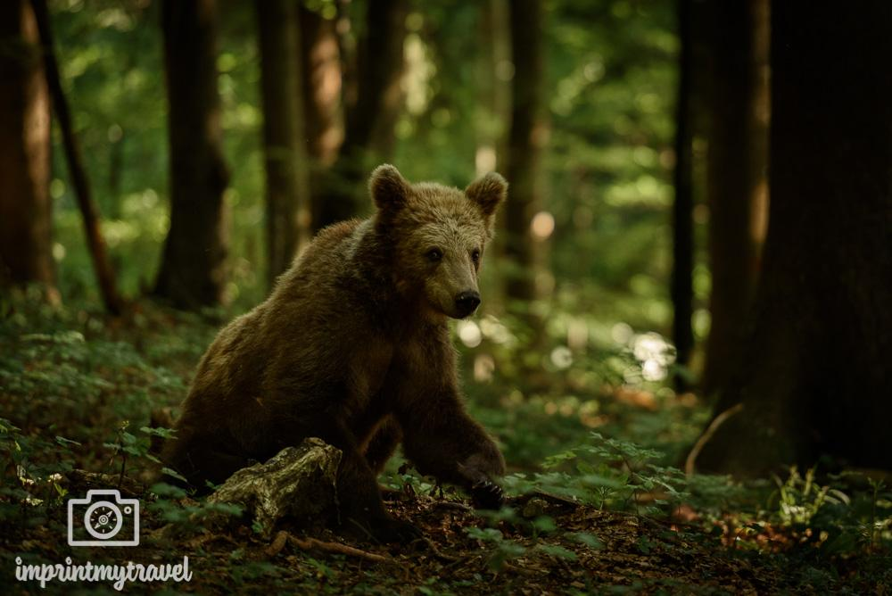 Fotokurs Bären